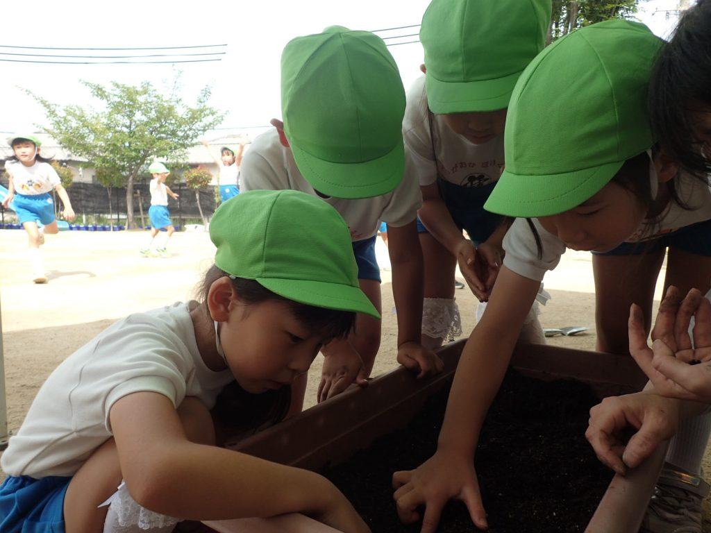 ゆきぐみ 三尺豆を育てよう!